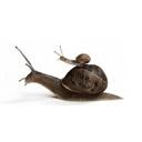 snailwrangler